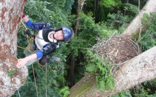 an image of a smiling woman high climbing in the jungle trees