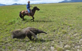 an image of a man riding on a horse next to an anteater on our ranch venture