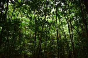 Picture of the middle of the Guyanese jungle