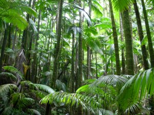 An image taken from the inside of a jungle, showing an array of the bamboo plants and flora