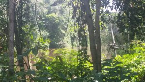 An image of the Guyanan jungle, taken from inside the trees looking out onto the main river