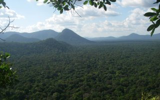 Image of the jungle treetops of Guyana