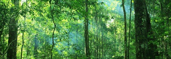 A thick jungle