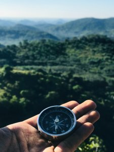 An image of a compass with a jungle backdrop